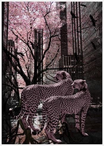 Pink Gepards